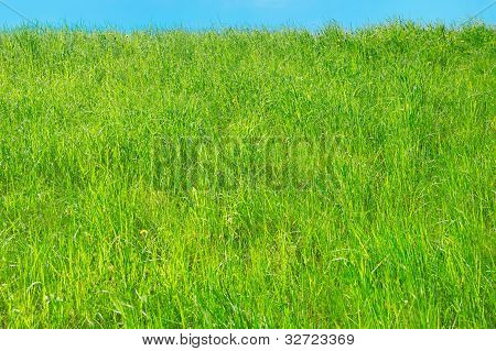 The Fresh Grass On The Hillock. Background.