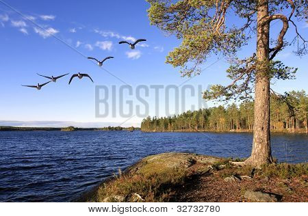 Pino y lago en otoño lit.
