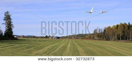 Sunny meadows in farmland area.