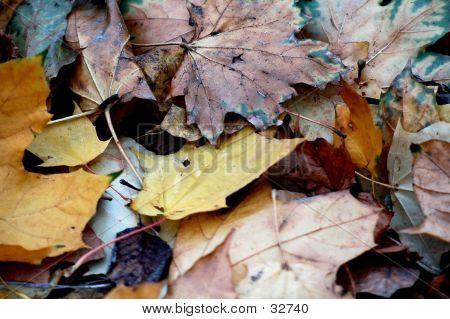 Fallen Leaves Two