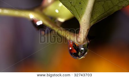 Water Drop On Flower Stem
