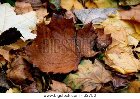 Leaves One