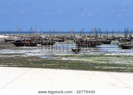 Fishing Village In Zanzibar