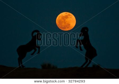 Silhouette of ram statues playing catch with the super moon. in Borrego Springs.