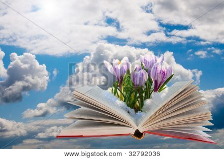 Open Book With Crocuses