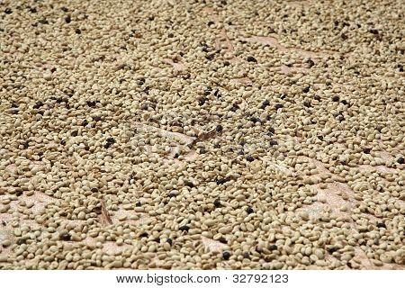 Coffeebeans landscape