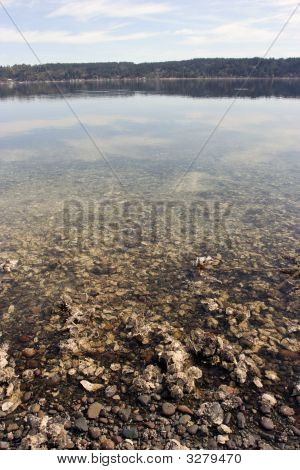 Transparent Waters Of Inner Puget Sound