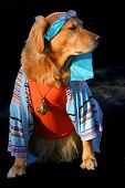 picture of cute dog  - goldren retriever dressed in cool hippy outfit - JPG