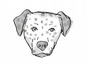 Retro Cartoon Style Drawing Of Head Of A Bullmatian , A Domestic Dog Or Canine Breed On Isolated Whi poster