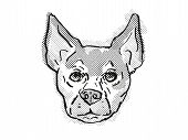 Retro Cartoon Style Drawing Of Head Of A Chihuahua, A Domestic Dog Or Canine Breed On Isolated White poster