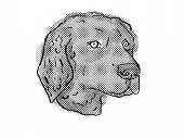 Retro Cartoon Style Drawing Of Head Of A Curly-coated Retriever, A Domestic Dog Or Canine Breed On I poster