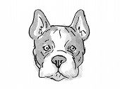 Retro Cartoon Style Drawing Of Head Of A French Bulldog, A Domestic Dog Or Canine Breed On Isolated  poster