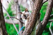 Cat Climbing Tree. Cat Hunts On Tree. Adorable Cat Portrait Stay On Tree Branch. Purebred Shorthair  poster