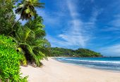 Panoramic View Of Sunny Beach With Palm Trees And Turquoise Sea In Seychelles. Summer Vacation And T poster