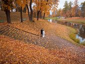 A Wedding Couple Walks Alone In The Autumn Park. poster