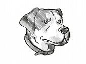 Retro Cartoon Style Drawing Of Head Of A Greater Swiss Mountain Dog, A Domestic Canine Breed On Isol poster