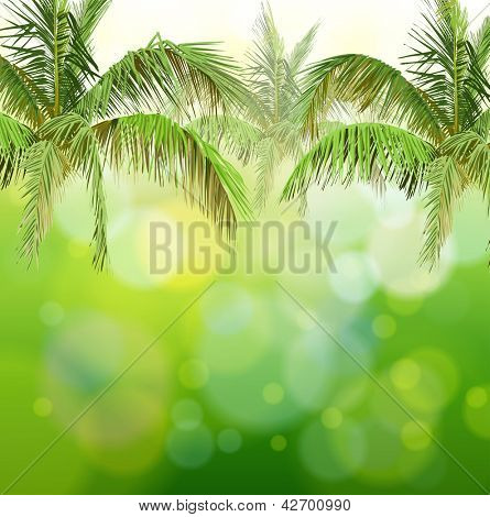 Green bokeh with branches of palm trees - vector background / Eps10