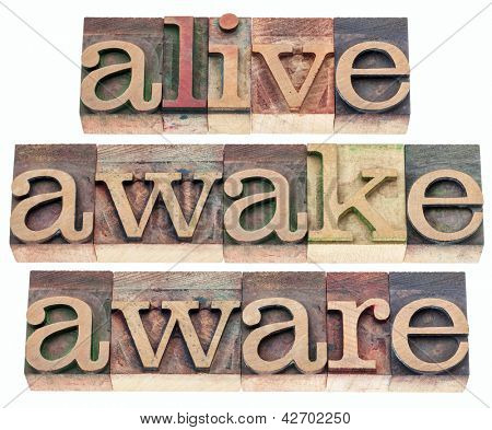 alive, awake, aware  words - isolated text in vintage letterpress wood type printing blocks
