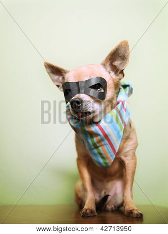 a cute chihuahua with a mask and bandana on