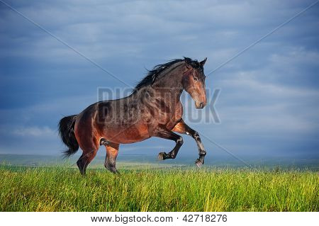 Beautiful brown horse running gallop