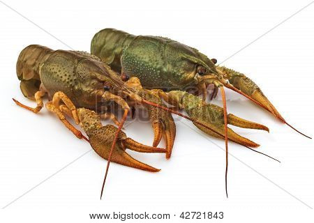 Group Of Fresh Lobsters