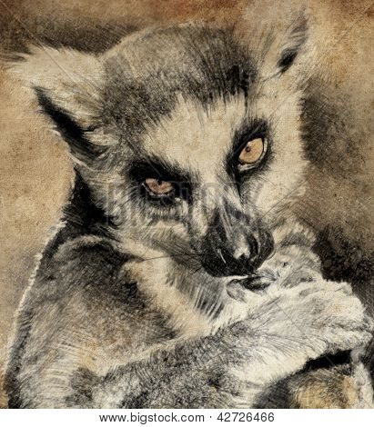 Illustration made with digital tablet, lemur in sepia
