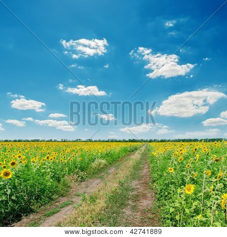 dirty road in sunflowers under blue cloudy sky