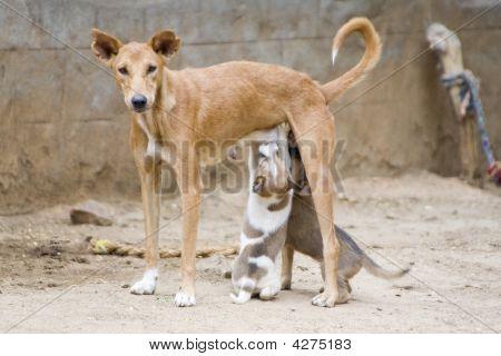 Dog Nursing It's Young