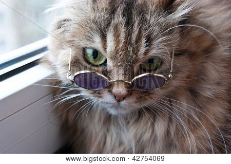 Clever Puss In Glasses