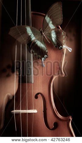 Violin Night