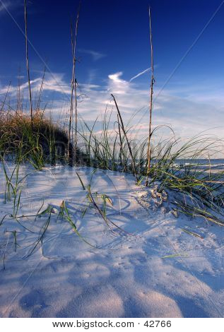 North Florida Beach Dune
