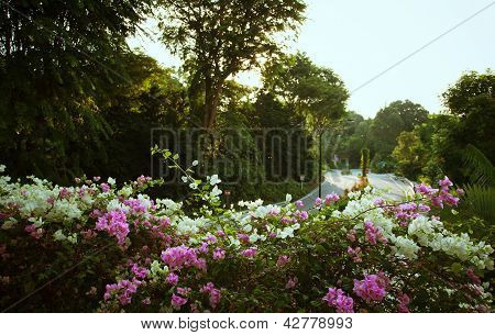Flower Railing