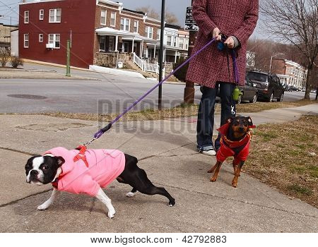 Bad Dogs On Leashes