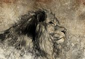 picture of lion  - Illustration made with digital tablet - JPG