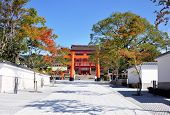 picture of inari  - Inari torii gates  - JPG