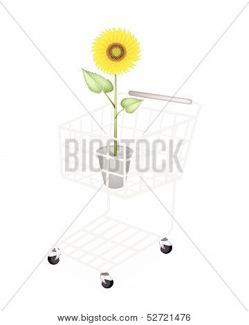 An Elegant Perfect Sunflower In A Shopping Cart