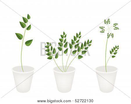 Beautiful Green Ferns In Tree Flower Pots