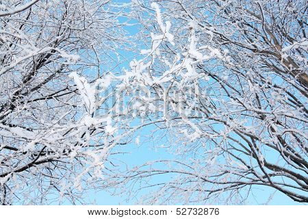 Beautiful Bushes In Frost In Winter Ay Background Of Blue Sky.