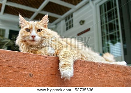 a cat lounging on a porch