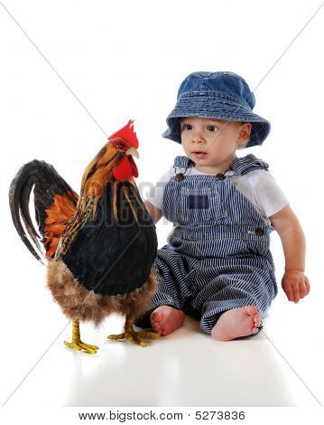 Baby Meets Rooster