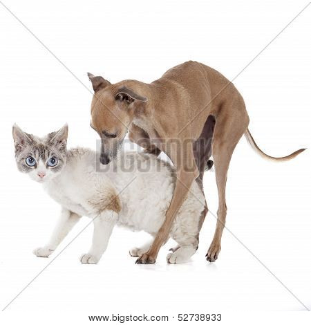 Dog Playing With A Cat