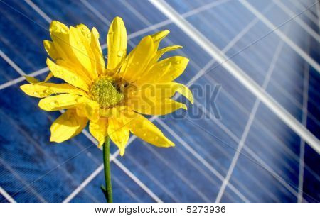 Solar Panel and Flower