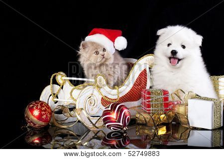 White dog spitz  and kiten Persian  wearing a santa hat, cat and dog