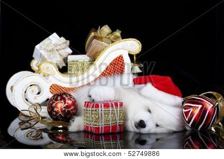 white puppy sleeping with a gift in paws