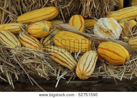 grooved gourds on hay