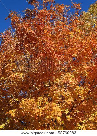 Autumn Gold & Orange