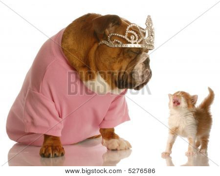 Bulldog Wearing Tiara With Kitten Meowing