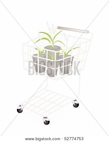A Set Of Dracaena Plant In A Shopping Cart