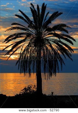 Palm Tree At Sunset...