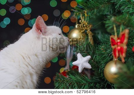 White Cat Sniffs Christmas Decorations On The Tree